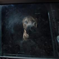 cachorros carros 6