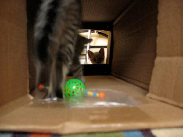 tunel papelao gatos