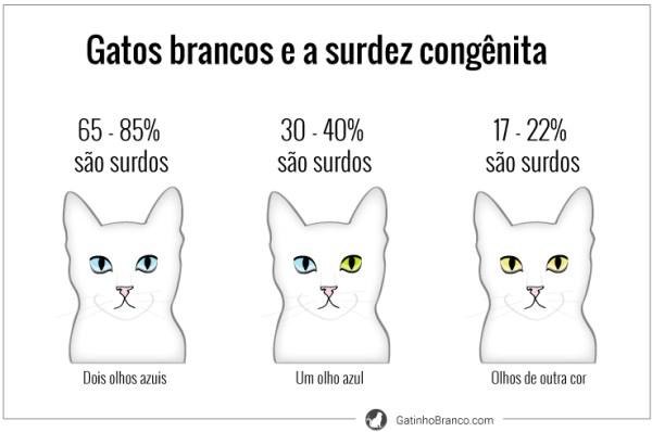 gatos-brancos-surdez-surdos