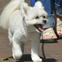 a verdadeira importancia dos passeios cachorros