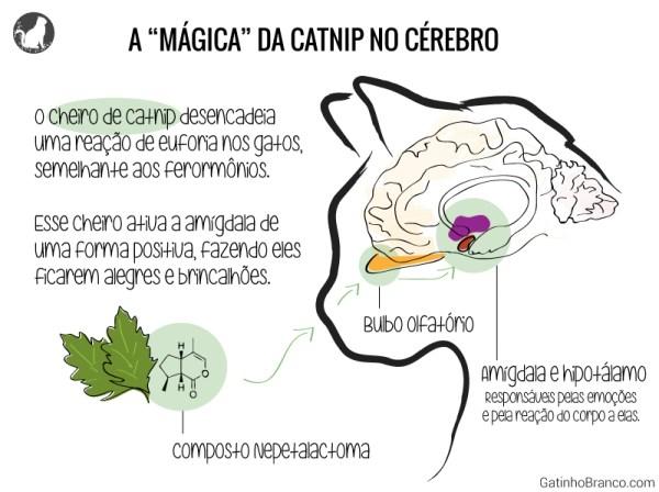 catnip erva dos gatos e o cérebro