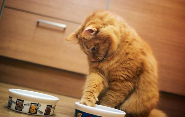 porque pratinhos de plastico fazem mal gatos