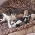 gatinhos camera ao vivo