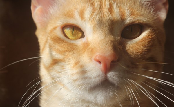 apresentar-gatos-fazer-pazes-2