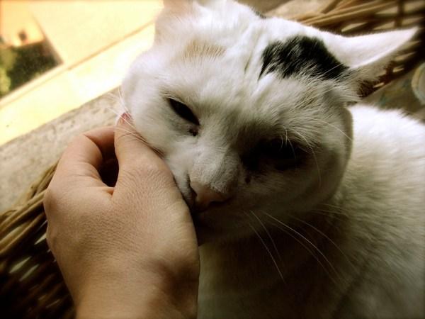 agradar-gatinhos2