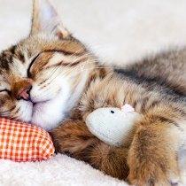 gato deixar dormir a noite