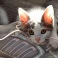 gato morder atacar calcanhar