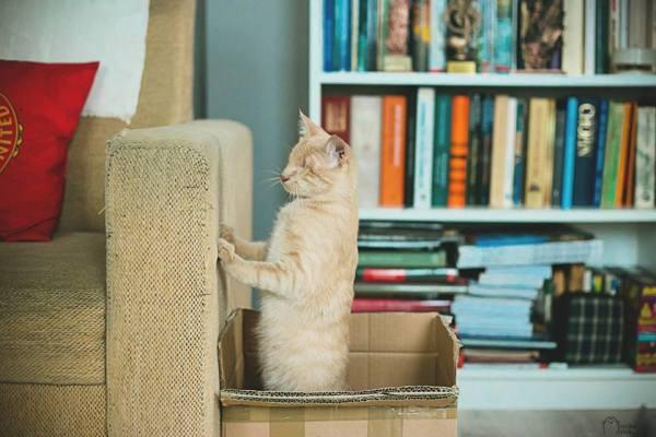 Sou Kiejstut. Tenho um ano de idade. Não tenho olhos, mas ainda sou um gato.