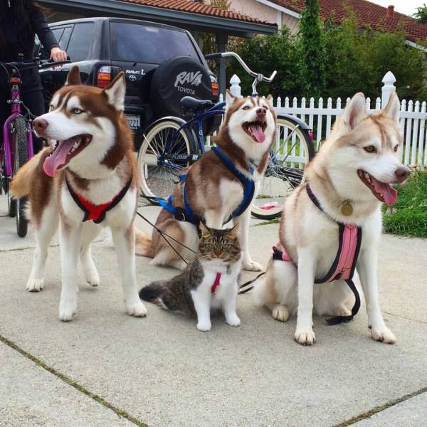 gatinha huskies 5