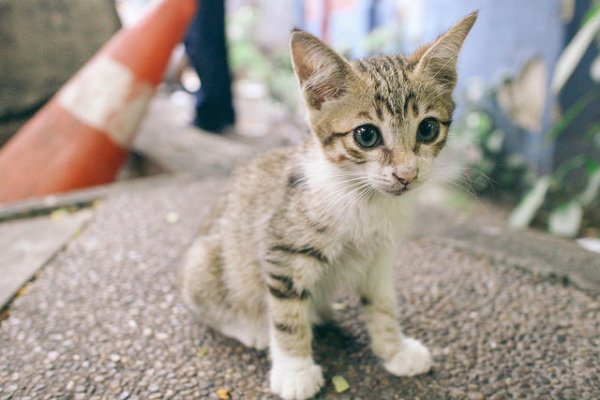 resgatar animal rua