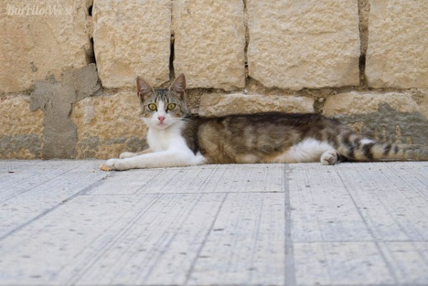 resgatar gato da rua