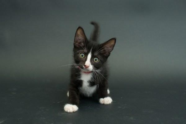 casey elise gatos pretos 1