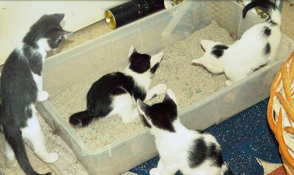 caixa-de-areia-gatos-2