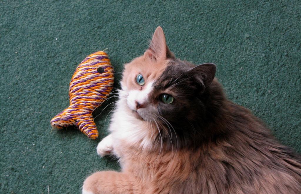 10 mitos perigosos sobre a alimentação dos gatos
