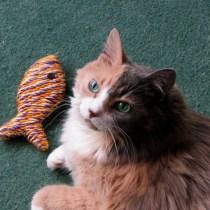 mitos-alimentacao-gatos-peixe