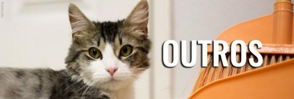 produtos-limpeza-perigosos-gatos