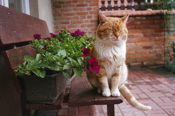 florais animais funciona como escolher como administrar onde comprar 3