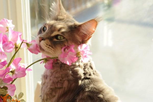 florais animais funciona como escolher como administrar onde comprar