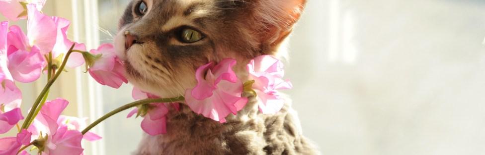 Floral para animais: um aliado do bem-estar