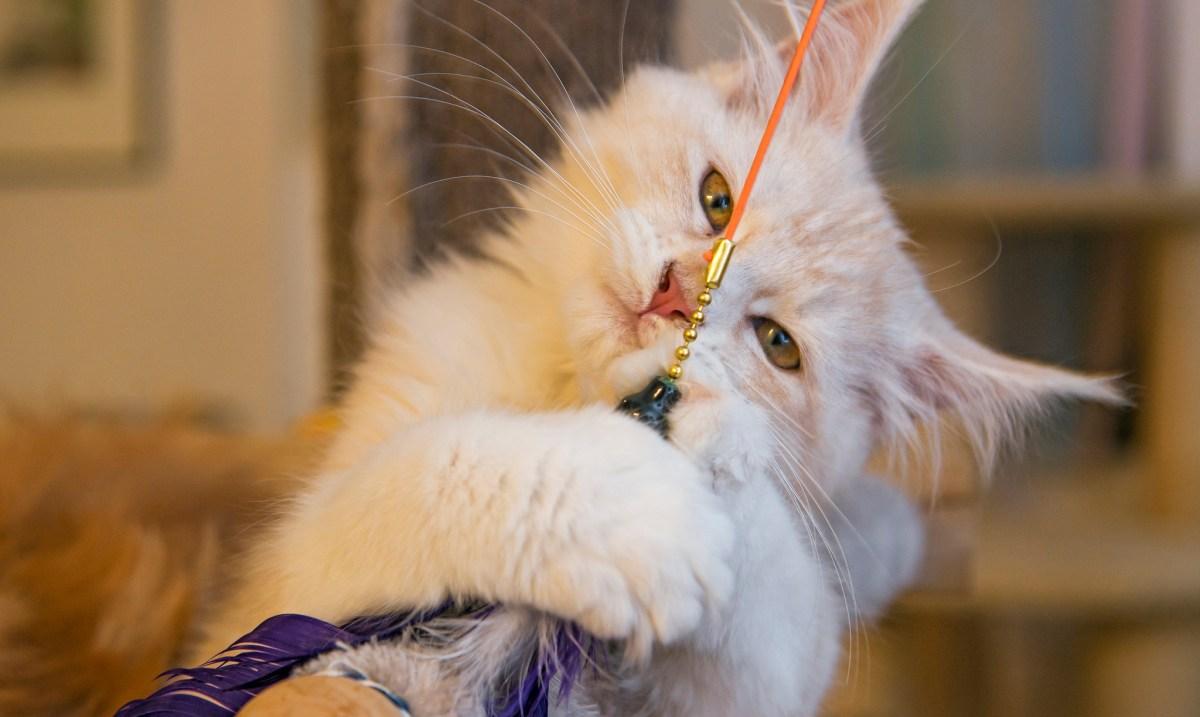 10 formas de passar um tempo de qualidade com seu gato