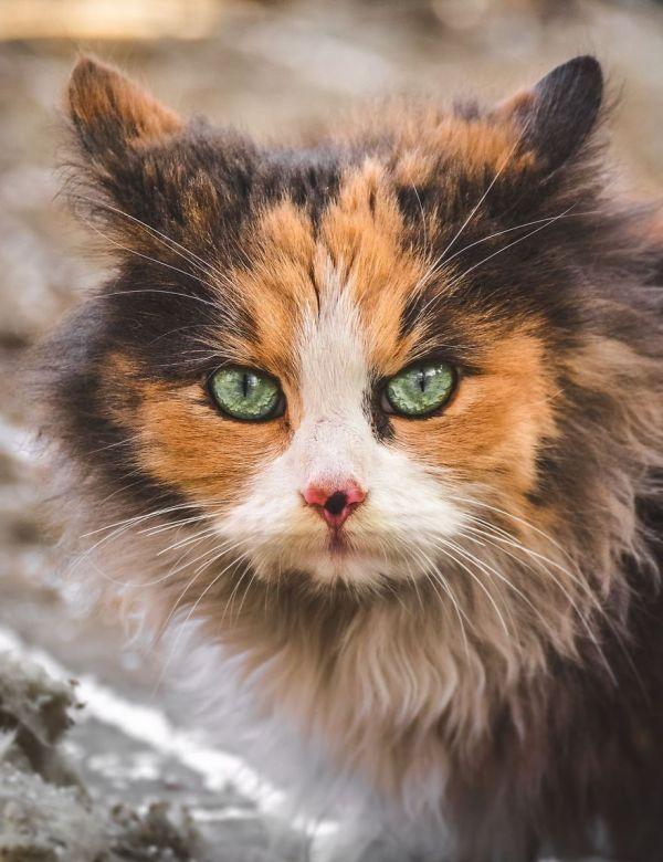 gatos rua fotografia gabriel khiterer (3)
