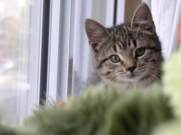 lar temporario caes gatos