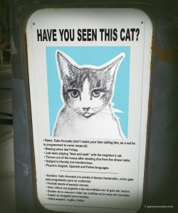 GA_Missing Cat sign