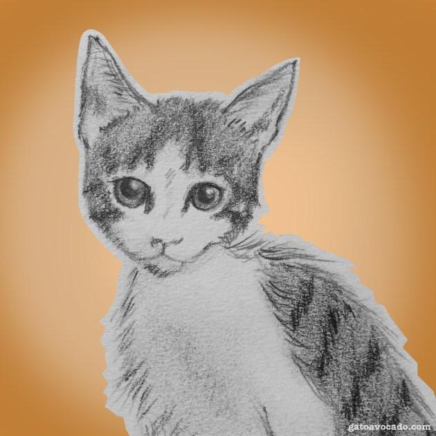 Gato Avocado. Kittengarten. circa 20??