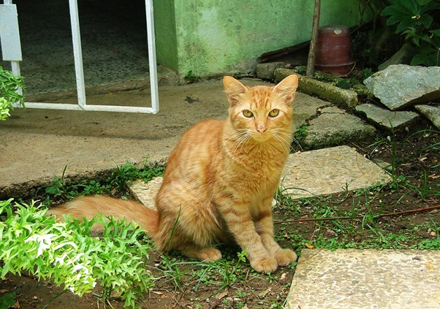 Feral cats can live in human territories. Some even get adopted. Photo: Glorimar Anibarro