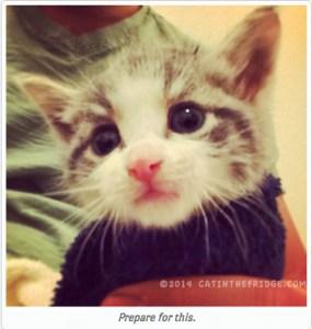 kitten season crepes list
