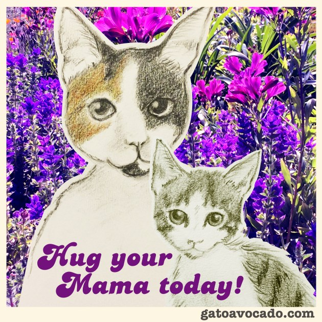 GA_comments_quotes mama cat