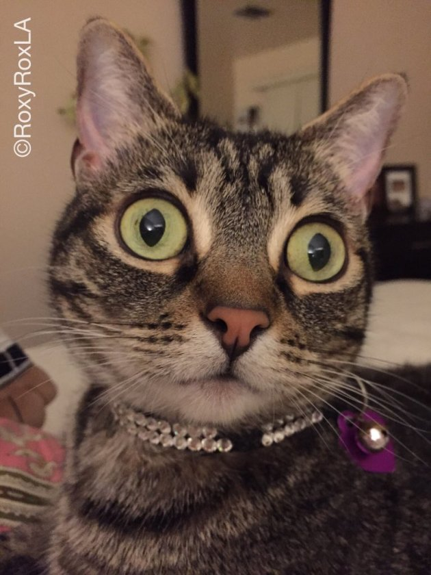 Size does matter... to cat eyes. Pic: RoxyRoxLA