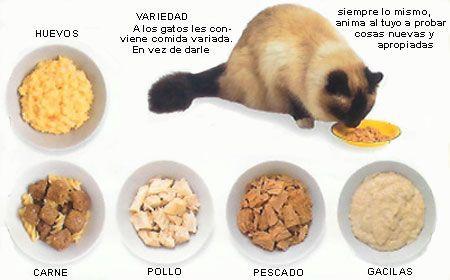 Consejos para la alimentación de tu gato