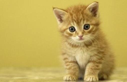 Etapas de crecimiento en los gatos