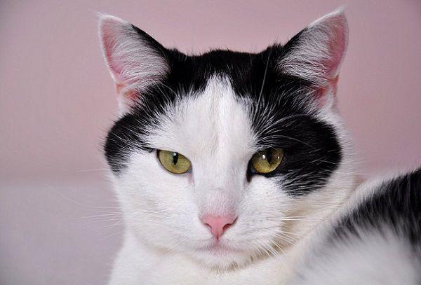 Beneficios de Tener un Gato en Casa