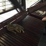 2014年台湾旅行記2九份と猫村
