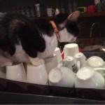 2015年2月の台北5 猫カフェへ