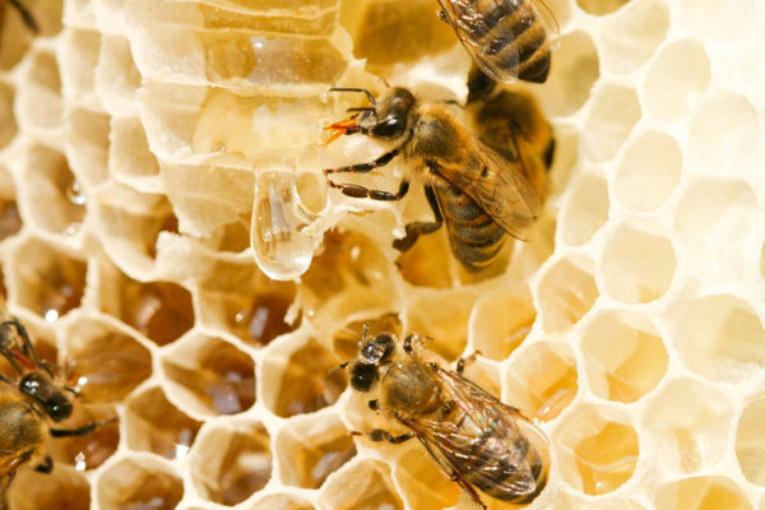 В Калужской области ведется работа  по предотвращению гибели пчел