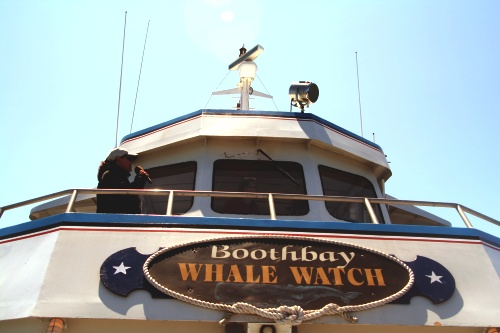 Boothbay Whale Watch