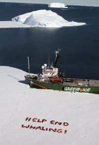 Greenpeace Ice Breaking