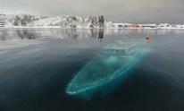 Ship Photo of the Day – Haunting Image of Sunken Boat in the Antarctic