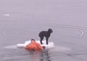 Sailors Rescue Stranded Dog from Ice [VIDEO]