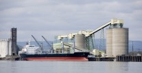 South American Grain Continues to Support Panamax Rates, Capesize Ships Take Another Hit