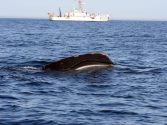 NOAA Seeking Permanent Rule to Reduce Whale Ship Strikes Along U.S. East Coast