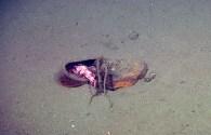 New Research Shows Where Deep Sea Trash Accumulates