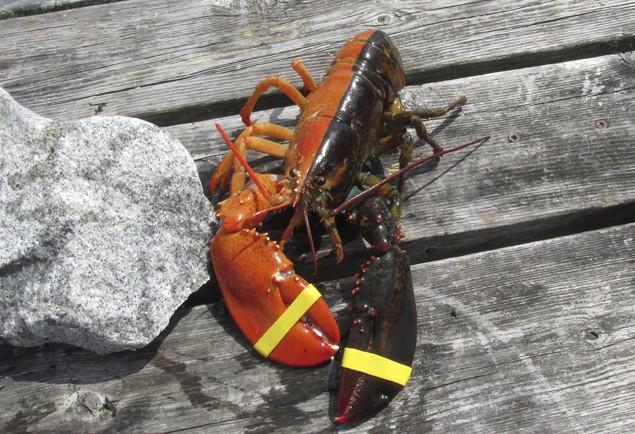 Image (c) REUTERS/Elsie Mason/Ship to Shore Lobster Co.