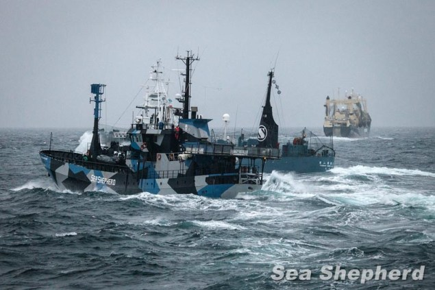 Harpoon vessels cuts in from of The Bob Barker, disrupting their course on the slipway of the Nisshin Maru Photo: Eliza Muirhead courtesy Sea Shepherd Australia