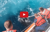 Watch: Coast Guard Rescues 800-Pound Turtle Caught in Fishing Gear