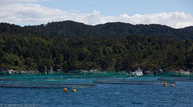 fish farm salmon norway marine harvest