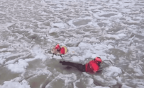Coast Guard Rescues Dog from Icy Lake – Your Feel Good Video of the Day